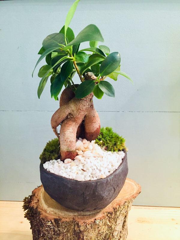 """Keshiki """"Un arbre en poche"""""""