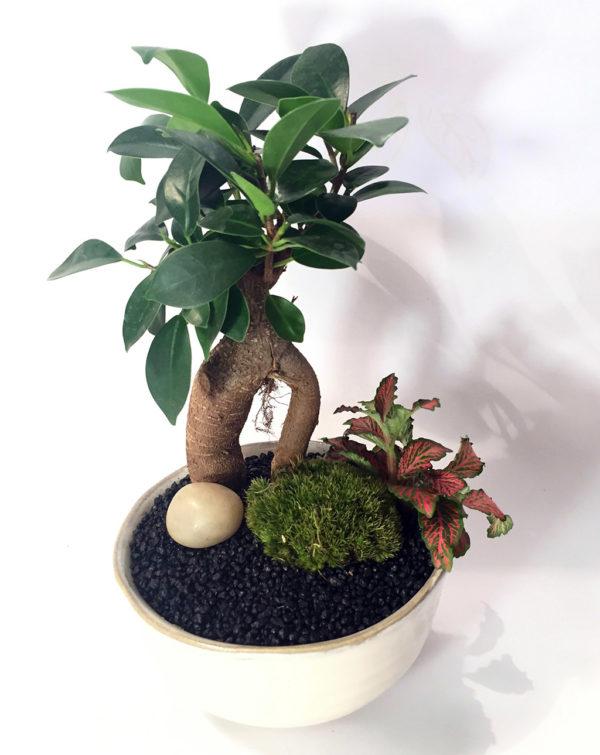 "Keshiki ""Fier d'être un bonsaï"""