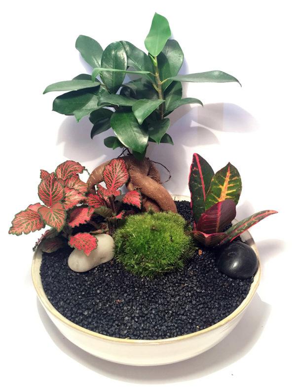 """Keshiki """"Un jardin sous mon arbre"""""""