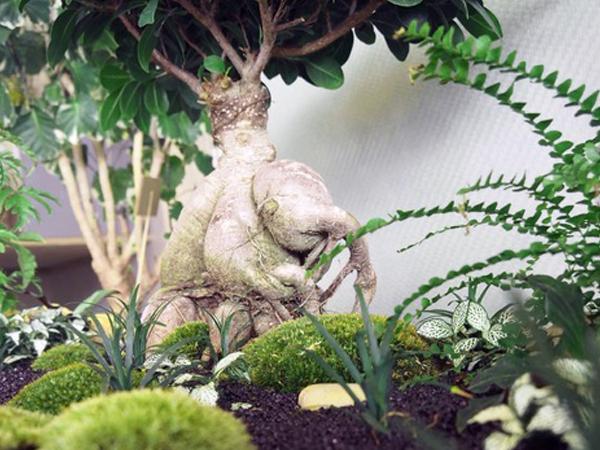 Ilho Garden