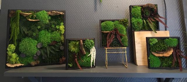 Cadres végétaux stabilisés par Kokenendo